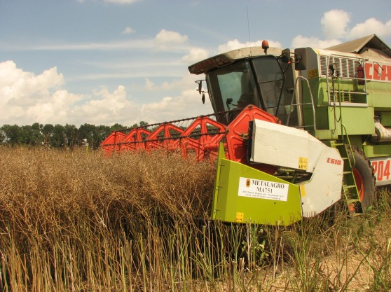 Canola (Rapeseed) Harvesting Attachment